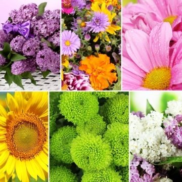 Flowers of the Month - 3 Month